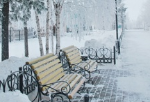 I miss snow / by Laurie Bosse