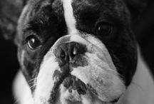 Frenchies / by Evan Lemay