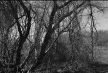 Trees / Photographs of interesting trees