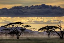 Africa / by Evan Lemay