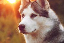Psy a šteniatka