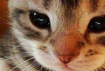 Mačky a mačiatka