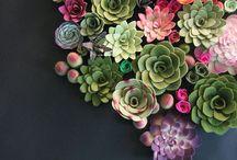 Floral fancies / by Emma Mackintosh
