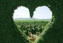 Topiary / Neatness in nature an  secret obsession  / by Emma Mackintosh