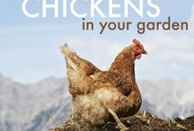 Raising Chickens / by Kristin Vent