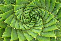 Fibonacci sequence & golden ratio