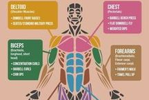 HUMAN BODY / Parts of the body
