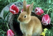 Bunnies / by Brenda
