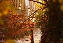Autumn Things / by Liz Carlson