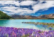 Wild New Zealand / The best of beautiful New Zealand's outdoor adventures. / by Liz Carlson