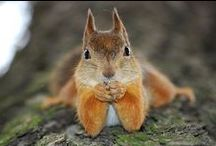 Squirrels make me happy! / by Cindy Johnson