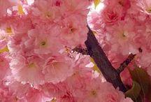 *flowers*fungi*coral / by Kelly Lynn Fujiwara