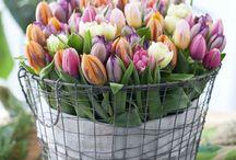 Spring - kevät... / Keväisiä juttuja...