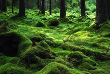 Green - vihreää... / Lempivärini !