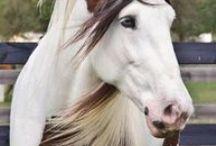 I love Paint Horses