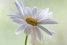 Kauniita kukkia...
