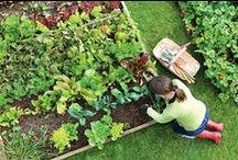 Vegetable Garden Design / Get inspiration for your own vegetable patch from these garden designs and plans.