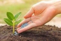 Homemade Fertilizer / An easy and organic way to encourage healthy growth and more flowering is to create your own fertilizer for your house plants.