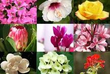Flower Garden Ideas / Learn how to grow flowers in your home garden through this board.