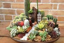 Dish Garden / a garden of plants growing in a shallow dish or bowl for a container.