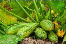 Vegetables for your Garden / Create your own backyard vegetable garden this summer.