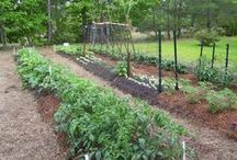 Raised Bed Gardening / It is ideal for growing leaf and small root crops.