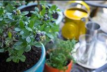 Cocktail Garden / Cheers to the cocktail garden! Grow a happy hour in your own backyard with these good-time tips.