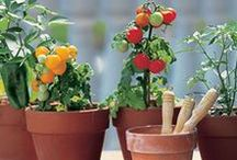 Salsa Garden / Learn how fast and easy it is to plant a salsa garden at your own home.