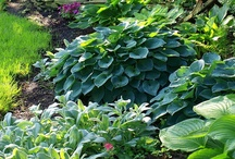 Garden & Outdoor Inspiration