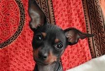 Puppy Love (puppies & pets)