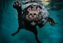 Dogs / by Sara Yeaton