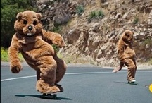 Skateboarding Animals / by Warehouse Skateboards
