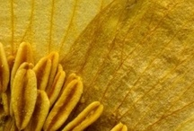 I>colours+textures>hello yellow / by Claire