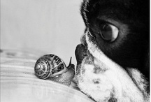 Funny Critters / by Megan Shafer