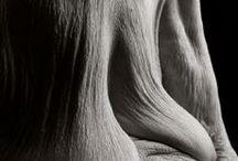 bodies / by Angela Rodriguez