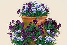 Container Gardening Ideas / Container Gardens. Find ideas and tips to create beautiful container gardens, how to combine plants and flowers for an awesome display outdoors, hanging basket ideas, container water gardens, seed starting tips, houseplant info, indoor gardening tips, and grow edible vegetables and fruits anywhere in containers.  / by Aspen Country