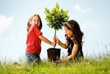 Arbor Day. Plant a Tree! / Happy Arbor Day! To celebrate, plant a tree today! Find tree planting info, how to choose the right tree, organic tips, true pruning advice and tree information for gardeners. / by Aspen Country