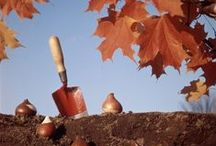 Fall Garden Tips / Fall Gardening Tips. Find smart garden ideas for fall, what to plant in autumn, fall flowers, fall plantings, fall garden cleanup tips, how to plant spring bulbs, fall seed saving tips and fun ways to decorate your fall garden.  / by Aspen Country
