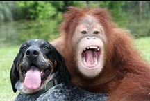 Animal Friends: Odd Couples / Animal Buddies. Find unexpected animal pals, dogs who love cats, monkeys that adore dogs, kind beasts best friends, animal odd couples and animals of different species that are best buds. / by Aspen Country