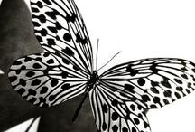 Butterfly Garden / by Cris Mena