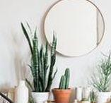 Gardening + Plants