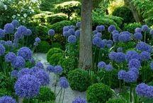 plants & flowers / by Lee Anne Godfrey