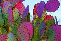 Yummy Colors / by Vicki Weir