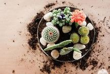Flowers + Plants / by POPSUGAR Home