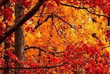 // feeling fall //