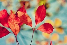 Autumn Love / by Julia Maran
