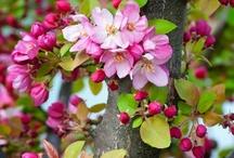 spring! / by Amy Hirsch