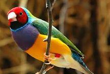 Bird's / Birds