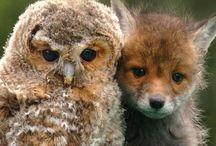 Animal Love - Totems