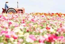 Spring / by kim hope